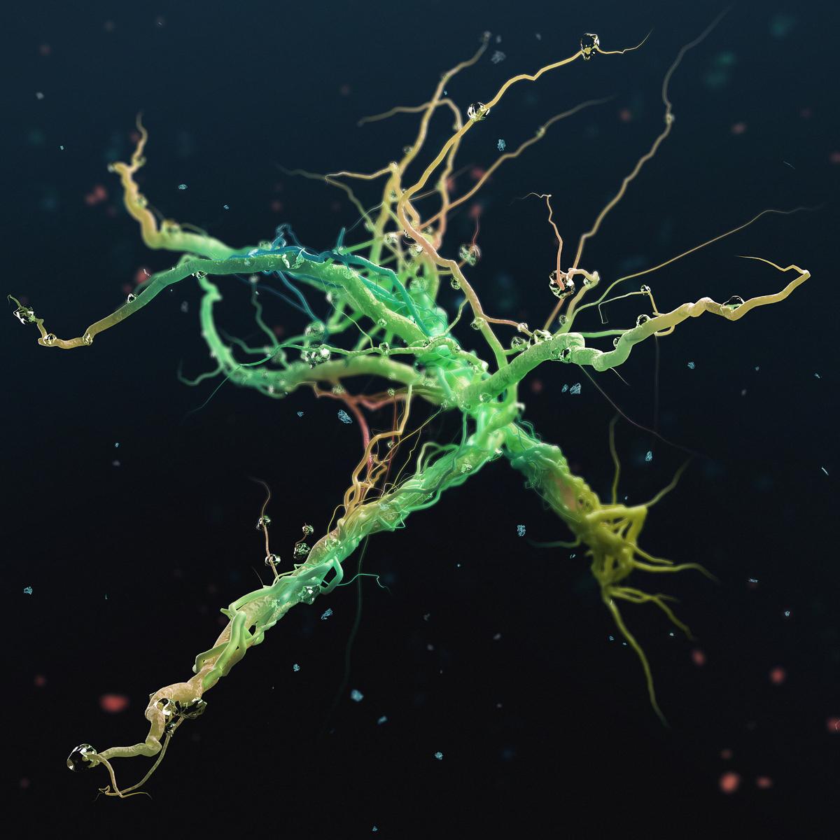 Rhizome - Bioshap3d 3D project